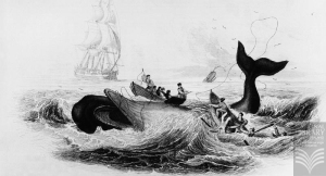 William Home Lizars Engraving of Whaling 1837 - Alexander Turnbull Library